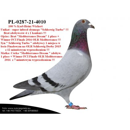 PL-0287-21-4010 Unikat - super Inbred