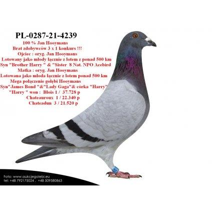PL-0287-21-4239 Super geny hodowli Jana Hooymansa !!!